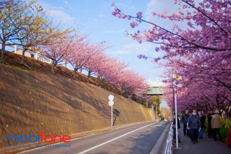 Cách đăng ký gói cước chuyển vùng quốc tế MobiFone khi đi Nhật Bản